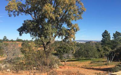 Een nieuw avontuur in Portugal